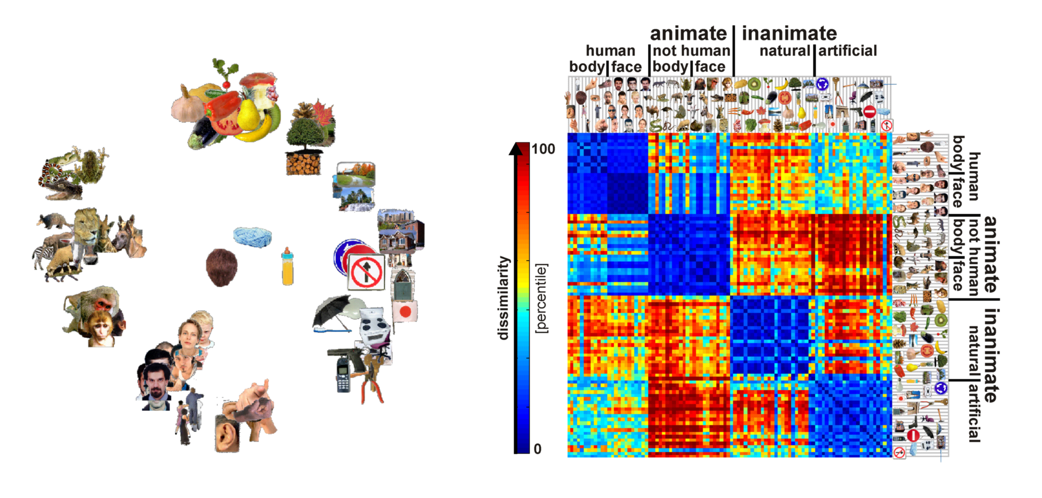 object vision and population code representation