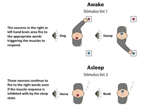 awake vs sleep